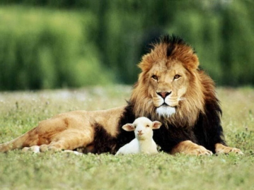 lion-and-the-lamb1.jpg